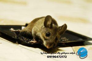 طعمه گذاری موش